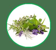 צמחי מרפא_מדיטק
